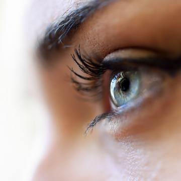 Complément naturel Coleus forskohlii traitement naturel de la tension oculaire - Forskoline - Easynutrition.eu